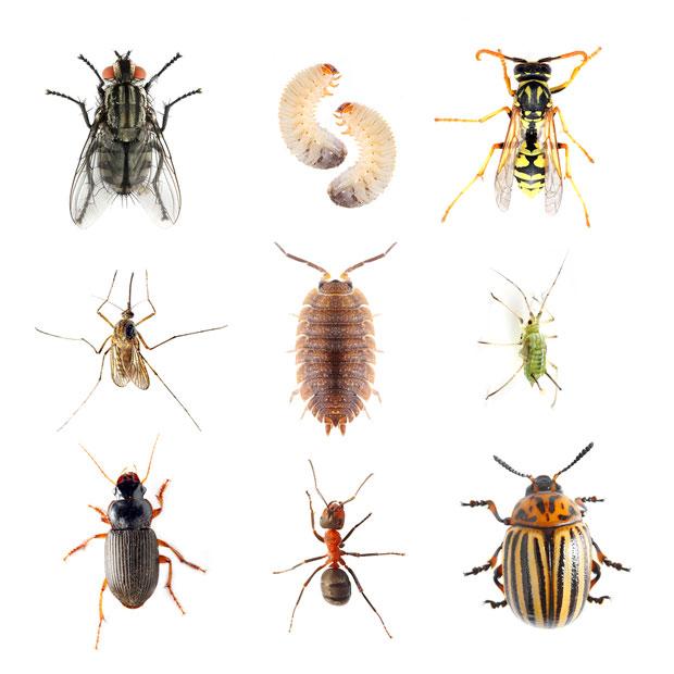 insekten im garten n tzlinge und sch dlinge das online. Black Bedroom Furniture Sets. Home Design Ideas